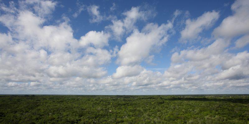 森林那麼大,影響轉換率的因素有哪些